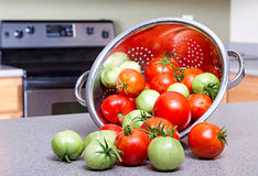 Organic tomatoes in a colendar Stock Images