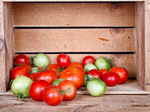 Organic tomatoes in a crate Stock Photo