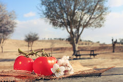 Organic tomatoes healthy food. Organic tomatoes grown on noble land healthy food Royalty Free Stock Images