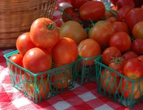 Organic tomatoes Royalty Free Stock Photography