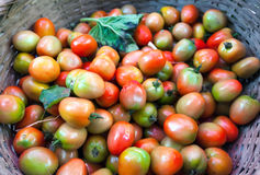Organic tomatoes from local market of vegetables Royalty Free Stock Images