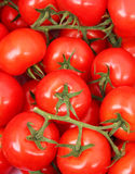 Organic tomatoes in a pile. Bio market concept, food background Royalty Free Stock Photo