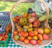 Basket of heirloom Tomatoes Royalty Free Stock Photography