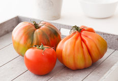 Organic tomatoes Royalty Free Stock Images