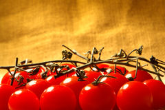 Organic Tomatoes on the Vine stock image