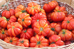 Organic tomatoes in wicker basket Royalty Free Stock Photo