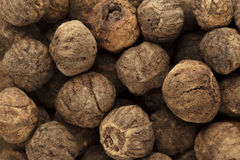 Organic treated Teak seed (Techtona Grandis). Royalty Free Stock Image