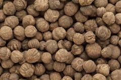 Organic treated Teak seed (Techtona Grandis). Royalty Free Stock Photos