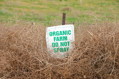 Organic tumbleweeds Stock Photo