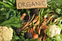 Organic vegetables black turnips, cauliflower, carrots, kale Stock Photography