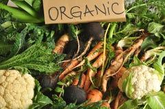 Organic vegetables black turnips, cauliflower, carrots, kale stock photography