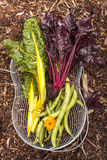 Organic veges Royalty Free Stock Photo