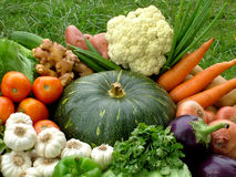 Organic vegetable basket Royalty Free Stock Photos