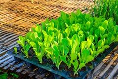 Organic vegetable cultivation farm Stock Image