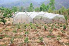 Organic vegetable farm Stock Photography