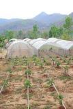 Organic vegetable farm Royalty Free Stock Image