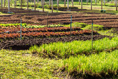 Organic vegetable farm Stock Images
