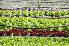 Organic vegetable farm Royalty Free Stock Photo