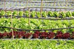 Organic vegetable farm Royalty Free Stock Photo