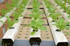 Organic Vegetable Farming Stock Image