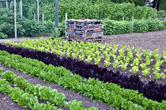 Organic vegetable and fruit allotment in summer Stock Photo