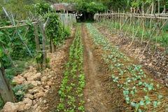 Organic vegetable garden Stock Images