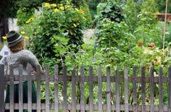 Organic vegetable garden Royalty Free Stock Photo