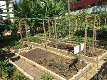 Organic vegetable garden Royalty Free Stock Photography