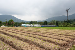 Organic vegetable garden and mountains Stock Photos