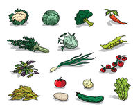 Organic vegetable royalty free stock photography