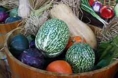 Organic Vegetable Royalty Free Stock Photo