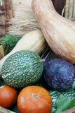 Organic Vegetable. Melon, Cucurbita moschata , Cucurbitaceae, Benincasa pruriens Stock Photo