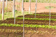 Organic vegetable plot Royalty Free Stock Photos