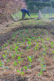 Organic vegetable plot. Royalty Free Stock Photos