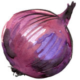 Organic vegetable red onion. watercolor illustration Royalty Free Stock Image
