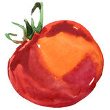 Organic vegetable red tomato. watercolor illustration Royalty Free Stock Images