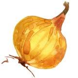 Organic vegetable yellow onion. watercolor illustration Stock Photo