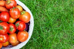 Organic vegetables in basket in grass. Fresh potato, royalty free stock images