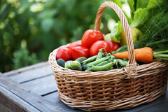 Organic vegetables in big basket royalty free stock images