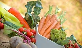 Organic vegetables Royalty Free Stock Photo