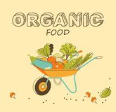 Organic vegetables concept Stock Images