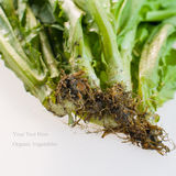 Organic Vegetables with dirty root Stock Image