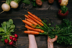 Organic vegetables. Farmer`s hand holding harvested carrots on the dark wooden background, top view Stock Image