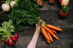 Organic vegetables. Farmer`s hand holding harvested carrots on the dark wooden background, top view Stock Photo