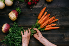 Organic vegetables. Farmer`s hands holding harvested carrots on the dark wooden background, top view Royalty Free Stock Photos