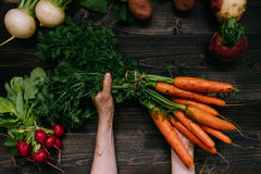 Organic vegetables. Farmer`s hands holding harvested carrots on the dark wooden background, top view Stock Image
