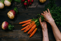 Organic vegetables. Farmer`s hands holding harvested carrots on the dark wooden background, top view.  Stock Photos