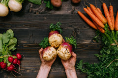 Organic vegetables. Farmer`s hands holding harvested swede on the dark wooden background, top view Royalty Free Stock Images