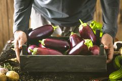 Farmer with aubergine Royalty Free Stock Photo