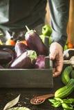 Farmer with aubergine Stock Photography
